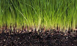 Seeding Grass